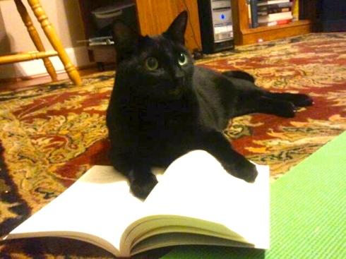 I guess this means Bogart is an Author Kitten now :D