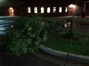 The night I went we had tornadic weather, and this tree got struck by lightning right before we got there!