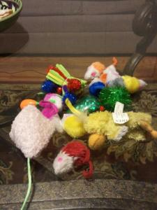 Bogart's pile of toys he collects in places on a regular basis.