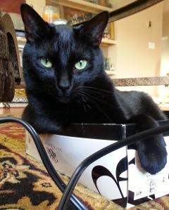 "Bogart says, ""Hi--meow."""