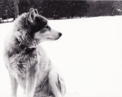 This is Shadow - my buddy. Unfortunately, he is no longer with us, but he loved snow just as much as me.