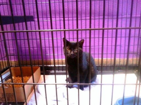 Bogart at Wayside Waifs the day I adopted him. He was four months old.
