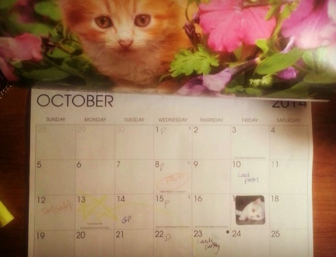 Pro: use kitty stickers on your calendar to mark deadlines