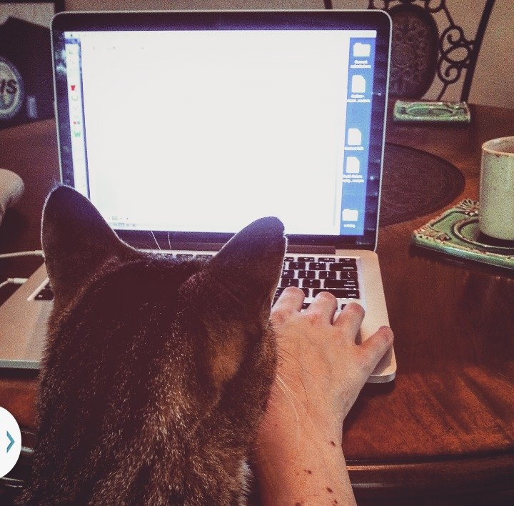 My cats help me edit, too.