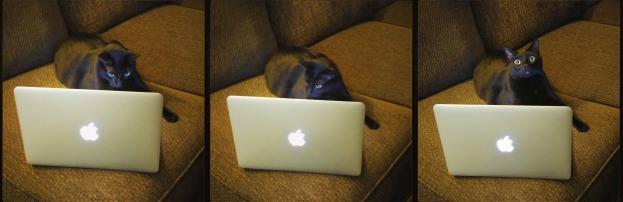 Bogart the Cat